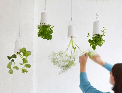 upsidedown plants