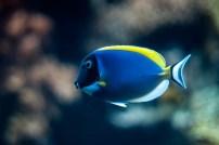 Ein av dei mange spesielle og fargerike fiskane i Oceanário