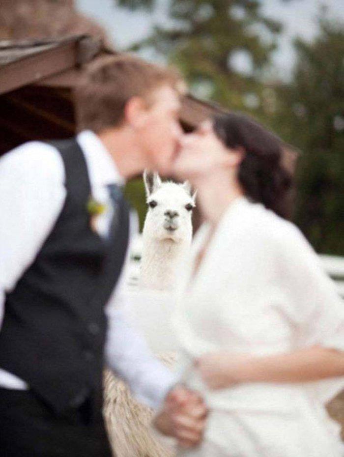 ιδέες φωτογράφισης γάμου75