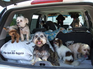 DogsExplorer