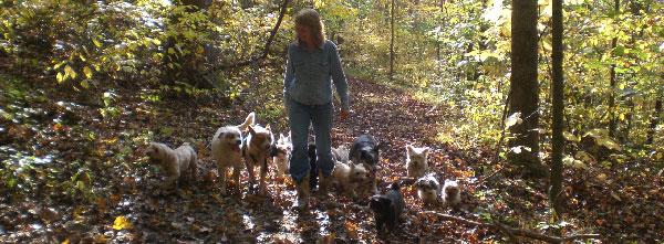 HavaPoo & YorkiPoo Puppies for sale Breeder