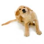 scratchy_dog
