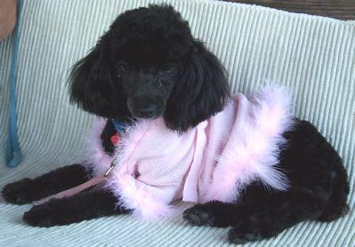 daiseypinksweater