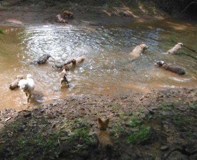 DogsSwim