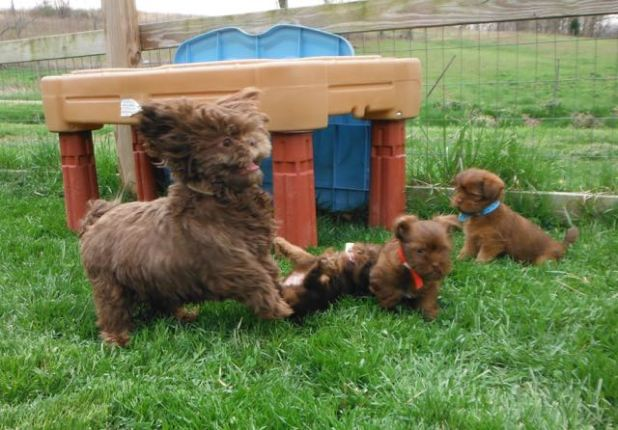 Moppy romping with her kids!