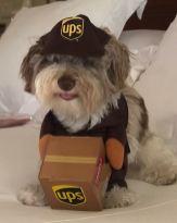 PatchEve UPS 1