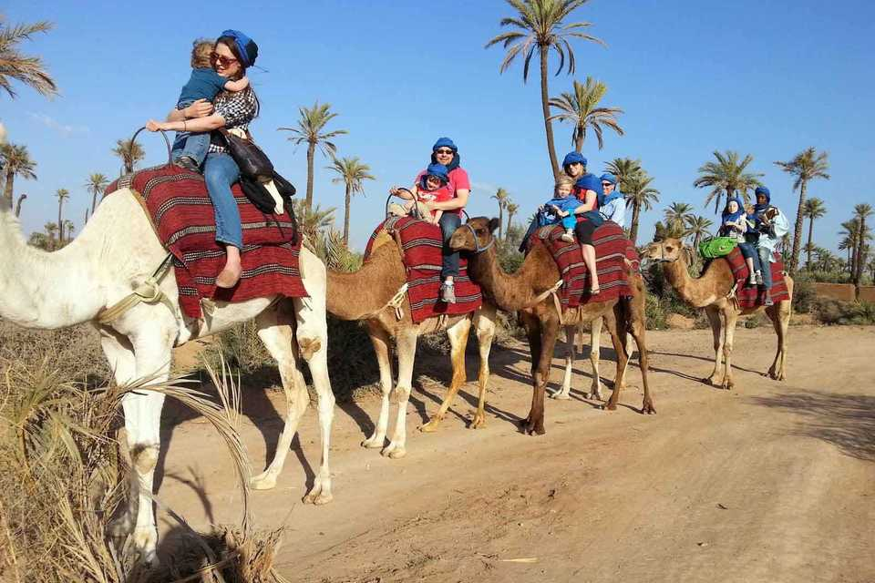 camel ride at palm grove Marrakech