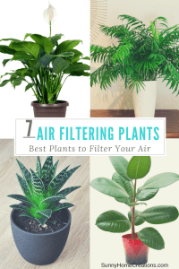 Best Air Filtering Plants to Clean your air