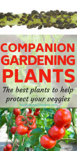 Companion Gardening Plants - the best plants to keep pests out of your garden