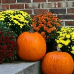Best Flowers for Your Fall Front Porch