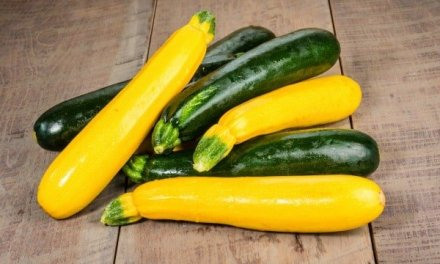 10 Awesome Vegetable Plants for Beginning Gardeners