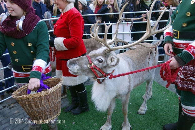 Things to Do in Covent Garden London, Pet the Reindeer!Things to Do in Covent Garden London, Pet the Reindeer!