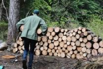 wood 19