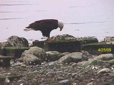 manaco-eagles-2