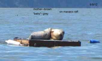 manaco-seal-raft-6