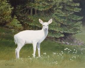 camano-white-deer