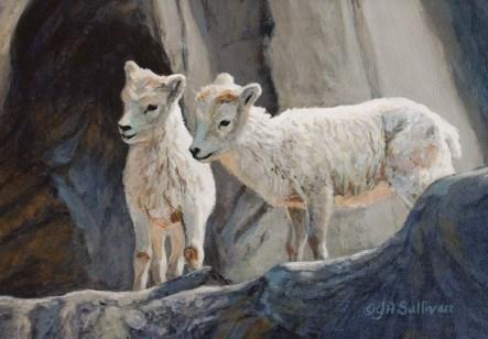 dall_sheep_kids