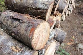 wood 16