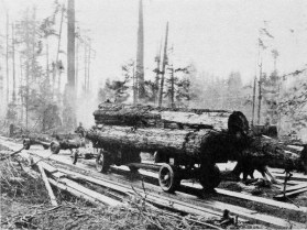 logging-1