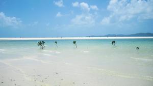 Australische Inseln Ostküste Whitehaven Beach, Whitsunday Islands