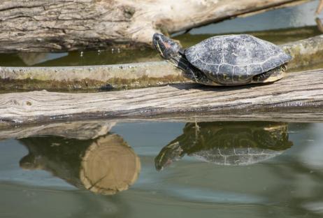 wien tipps: schildkröte tiergarten schönbrunn