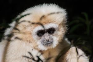 Garden Route Südafrika Sehenswürdigkeiten Tipps Highlights Monkeyland