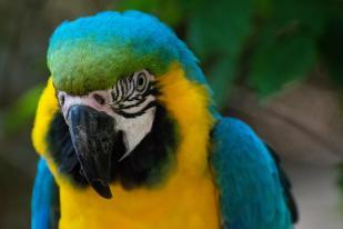 Garden Route Südafrika Sehenswürdigkeiten Tipps Highlights Birds of Eden Ara