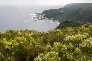 Garden Route Südafrika Sehenswürdigkeiten Tipps Highlights Tsitsikamma Nationalpark