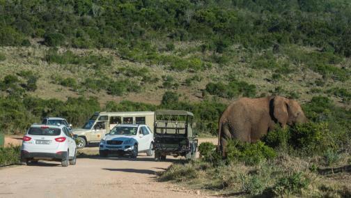 Addo Elephant Nationalpark Tour