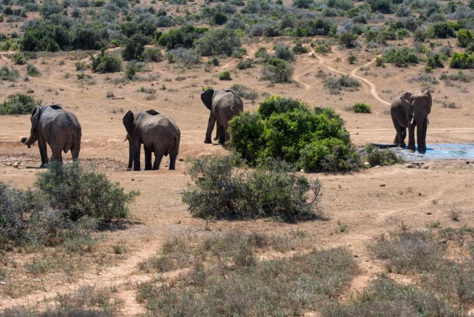 Elefantenpark Südafrika Elefanten