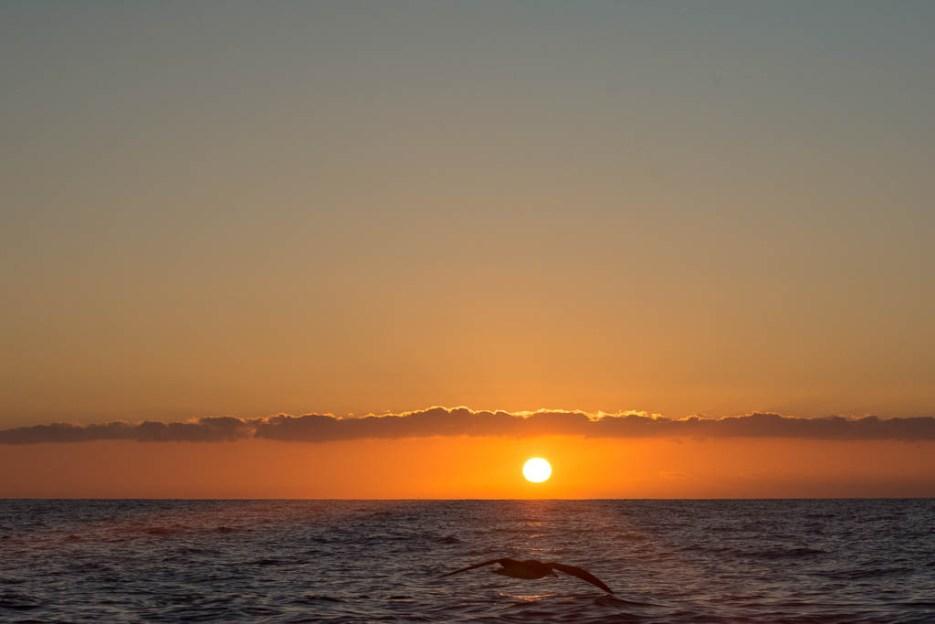 Whale Watching La Gomera Sonnenaufgang