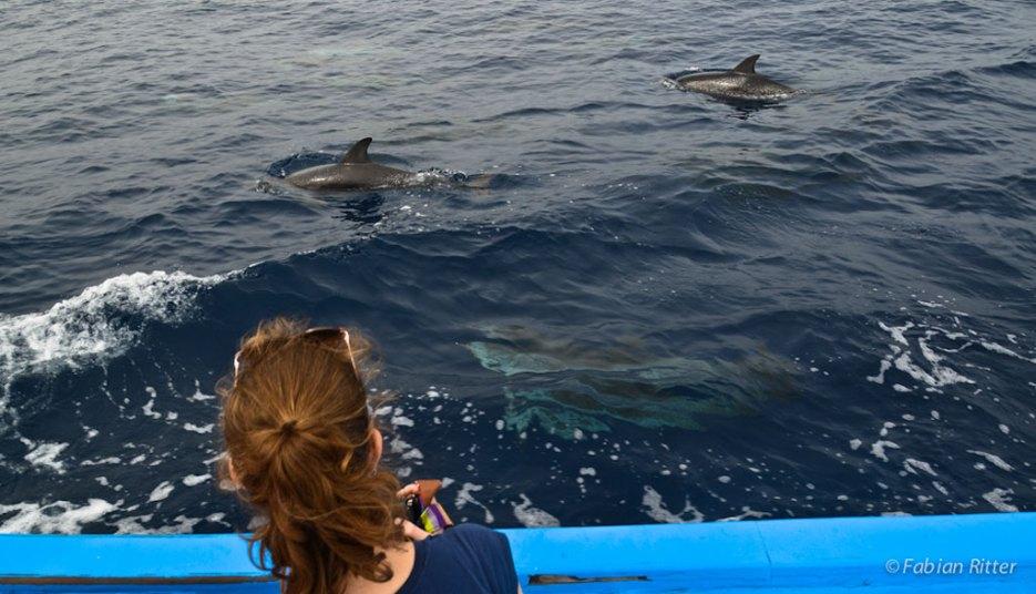 Wale beobachten La Gomera