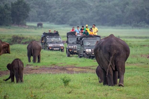 kaudulla safari elefanten jeeps