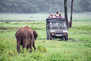 kaudulla safari jeep