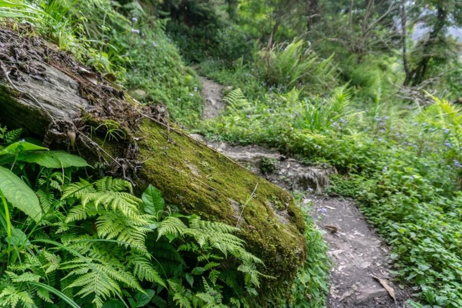 walami-trail-taiwan00011