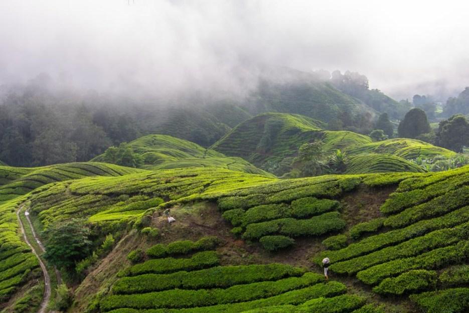 tamron 18-400 mm beispielfoto cameron highlands malaysia