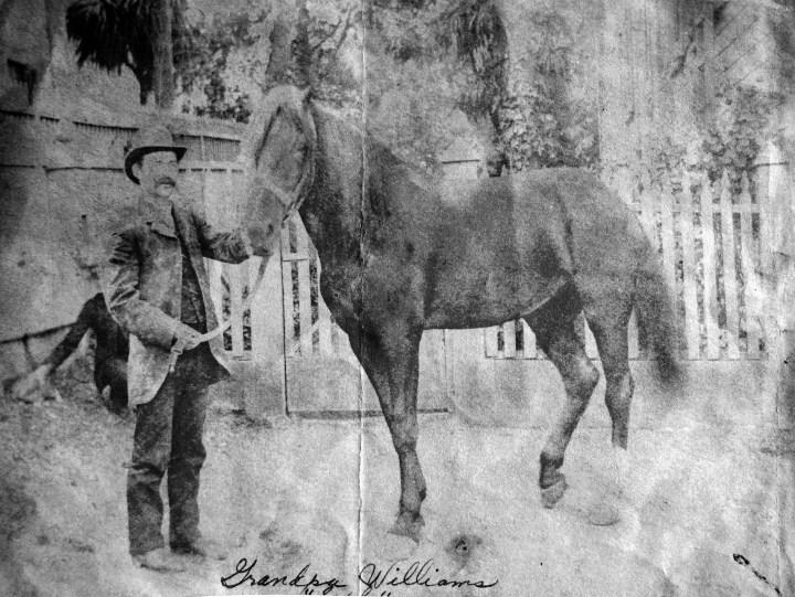 1905-c-Seph-Horse-257Joost-crop-fix-alt-color4BW-06Oct2015