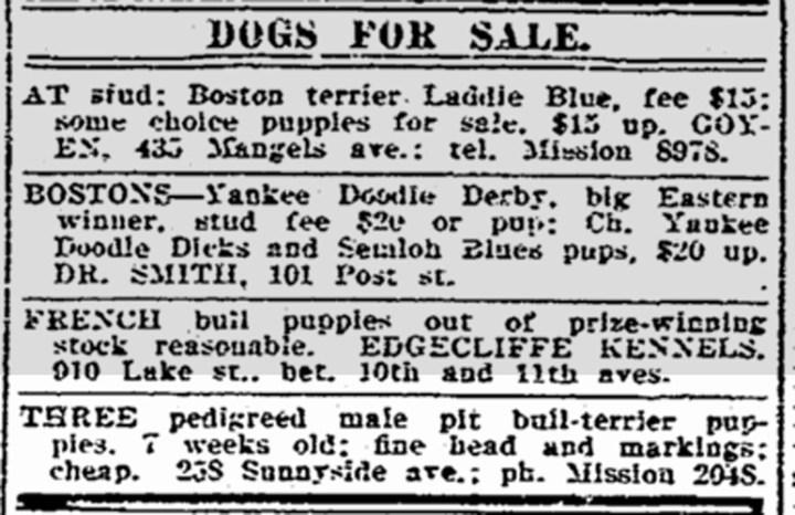 1914Jul26-sfchron-pitbull-puppies-for-sale-258Sunnyside