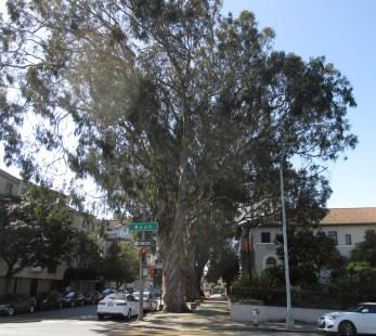 2021-Mary-Ellen-Pleasant-Memorial-Park-trees-OHair