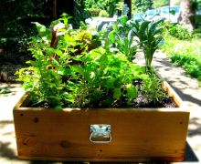 Culinary Mini Garden planted in The Suitcase Garden