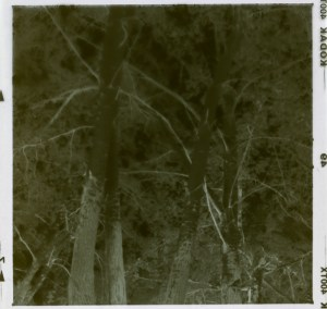 In View Negative