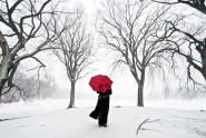 Prospect Park Blizzard - Navid Baraty