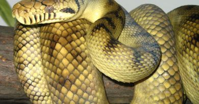 Shocking: 88 Poisonous snakes found in man's suitcase