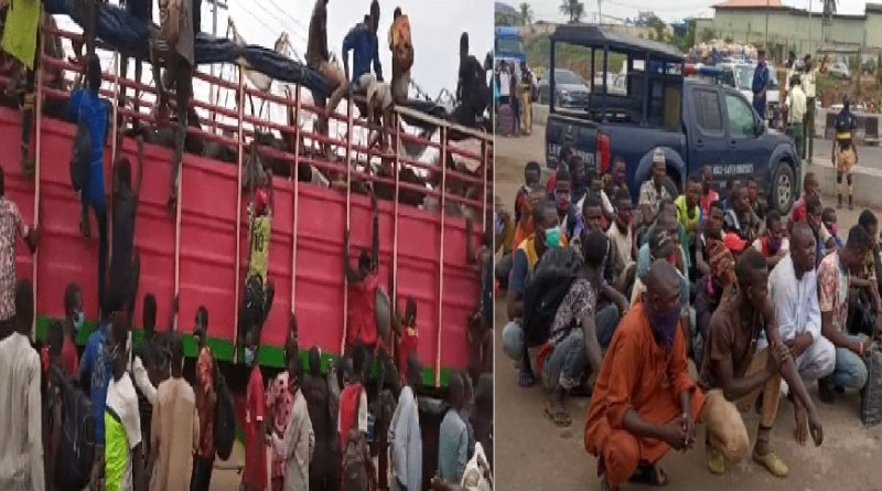 40 Hausa men from Zamfara hidden inside a truck loaded with cows arrested in Lagos (Photos)