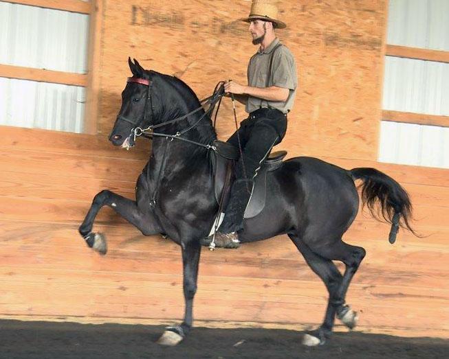 King-e-otto-b-saddle