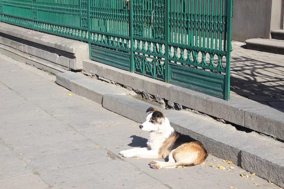chile_pa_dog_sm