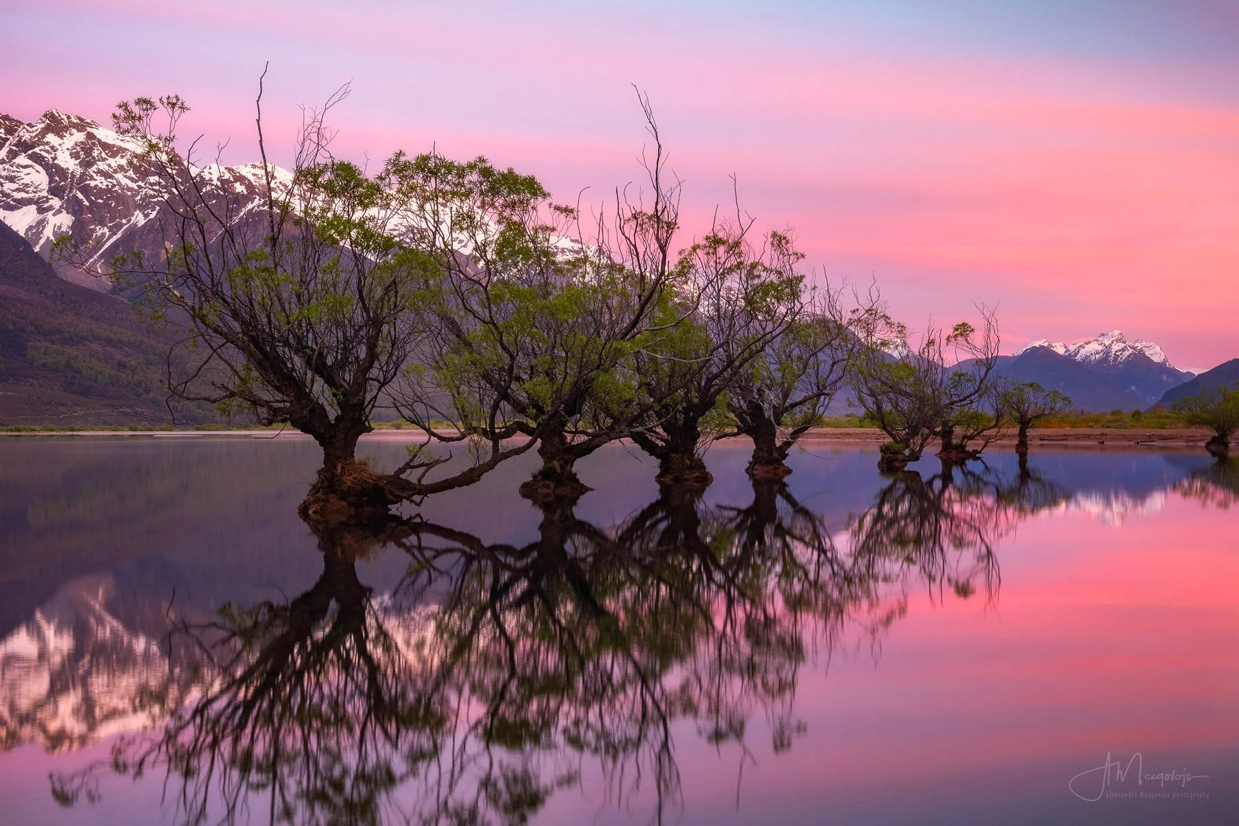 Glenorchy trees at sunrise