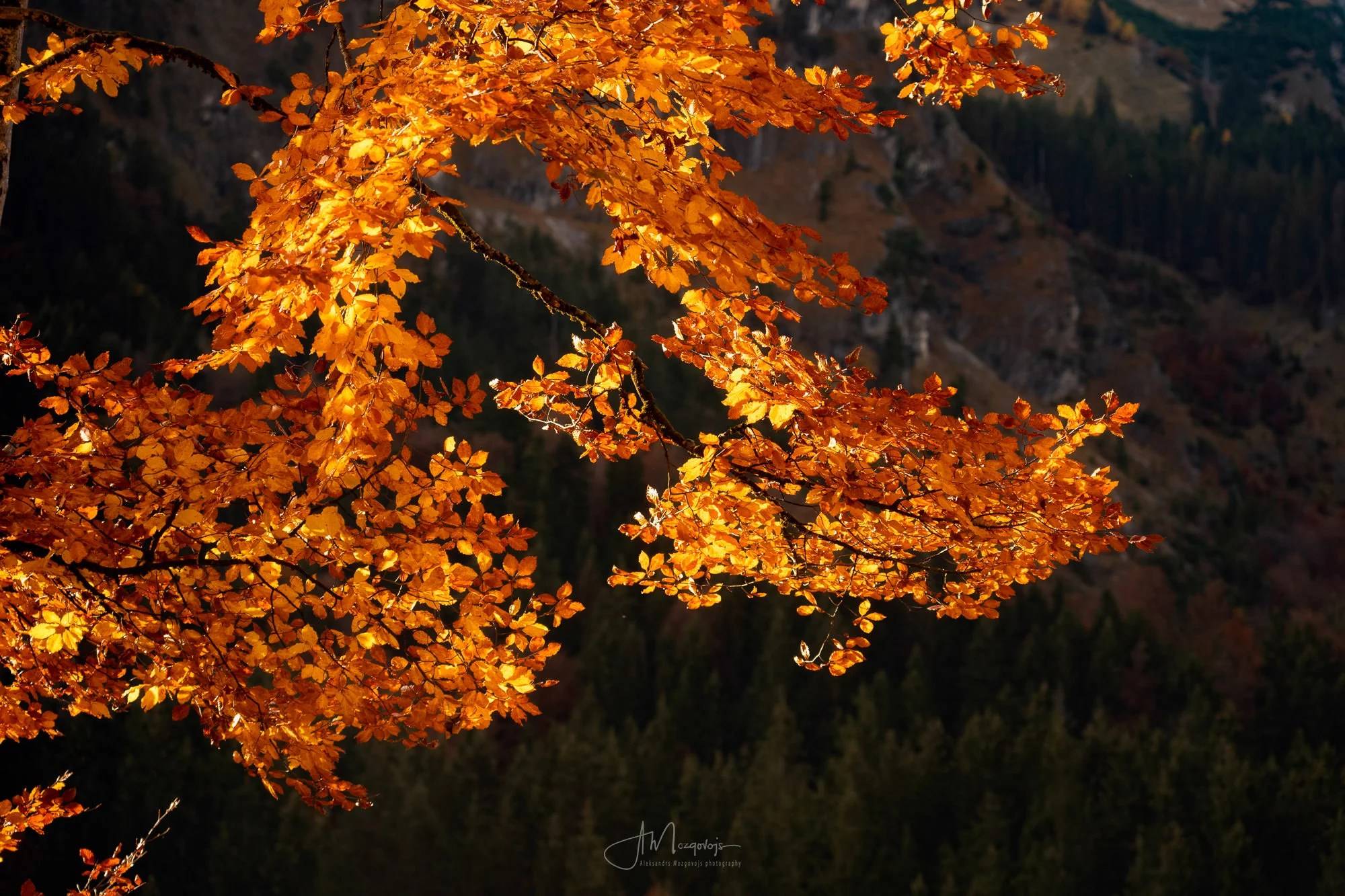 The foreground foliage is still lit and burning, while the background is already in the shadow