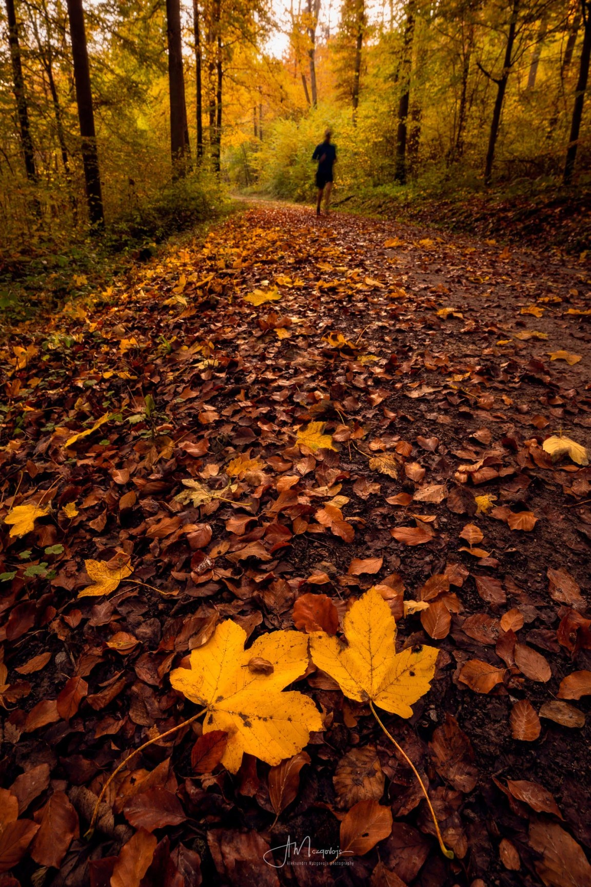 A classic composition in photographing autumn colors