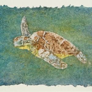 smelkoff-turtle-web